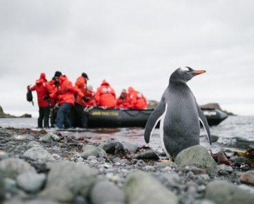 Poseidon Expeditions se asocia con Oceanites para evaluar el impacto ambiental cambiante en los pingüinos | Atención 8